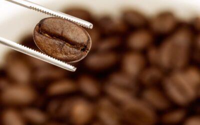 Kawy speciality